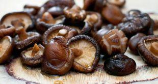 nam1 310x165 - Những món ăn, bài thuốc chữa bệnh tuyệt vời từ nấm hương