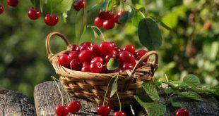 qua cherry 2 e1534411335805 750x400 310x165 - 7 tác dụng của quả cherry khiến bạn muốn ăn thử ngay