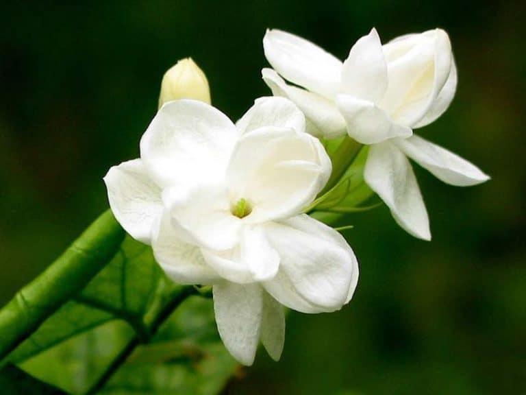 hương thơm tự nhiên