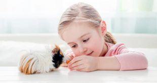 cho con nuoi thu cung 1 750x400 310x165 - Cho con nuôi thú cưng: Cẩn trọng với 10 loại vật này trước khi mua