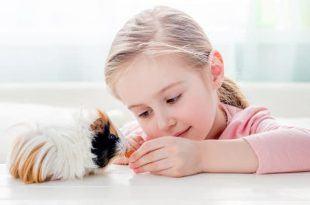 cho con nuoi thu cung 1 750x400 310x205 - Cho con nuôi thú cưng: Cẩn trọng với 10 loại vật này trước khi mua