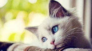 Top 8 Lợi ích của việc nuôi mèo cho sức khỏe