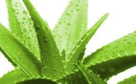 Top 8 Phương pháp chăm sóc tóc mọc nhanh hơn từ tự nhiên